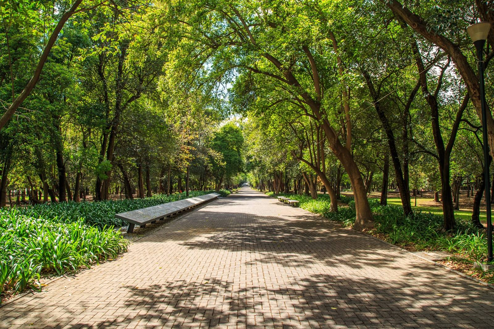 Bosque de Aragón en Ciudad de México.
