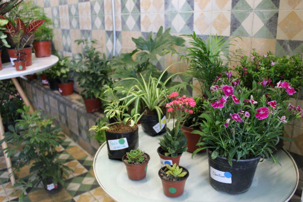 plant-fest
