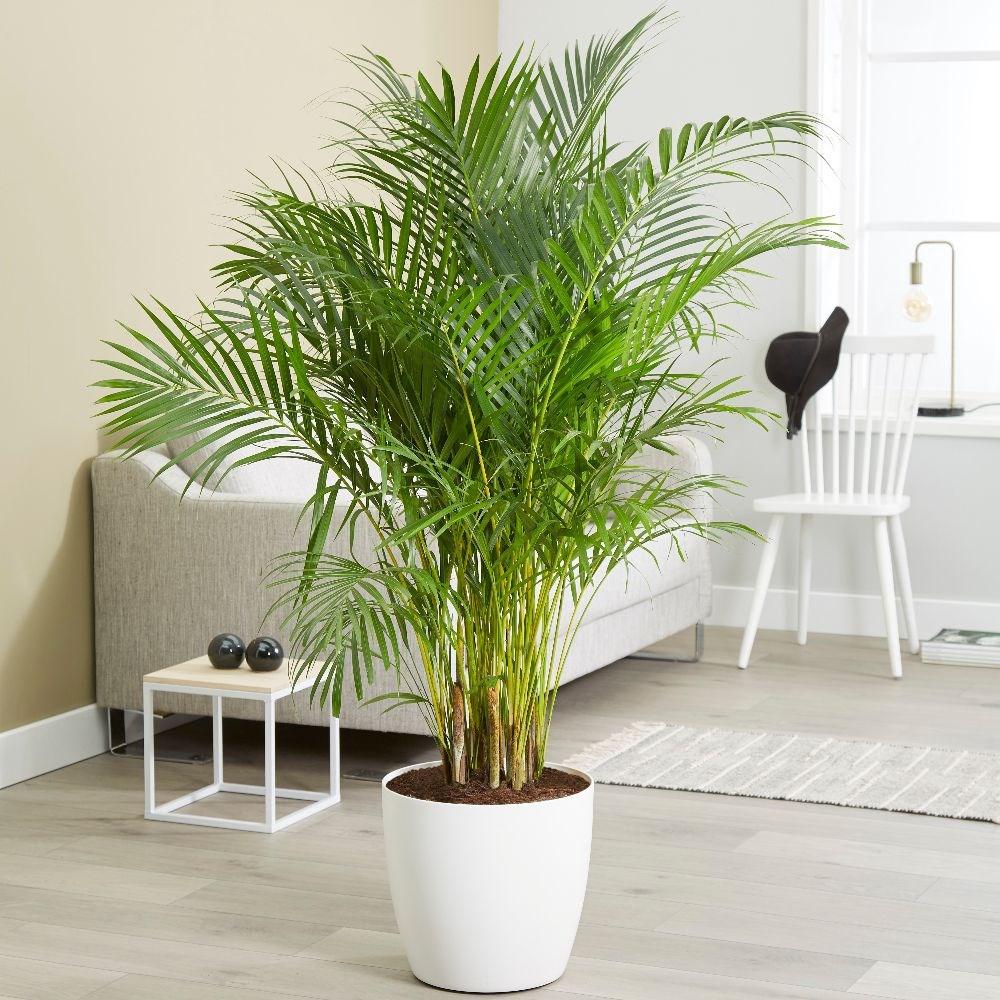plantas-purificadoras