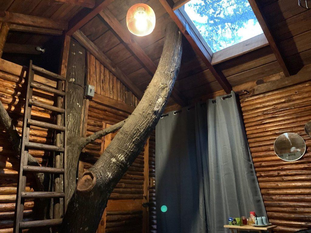 kali-tree