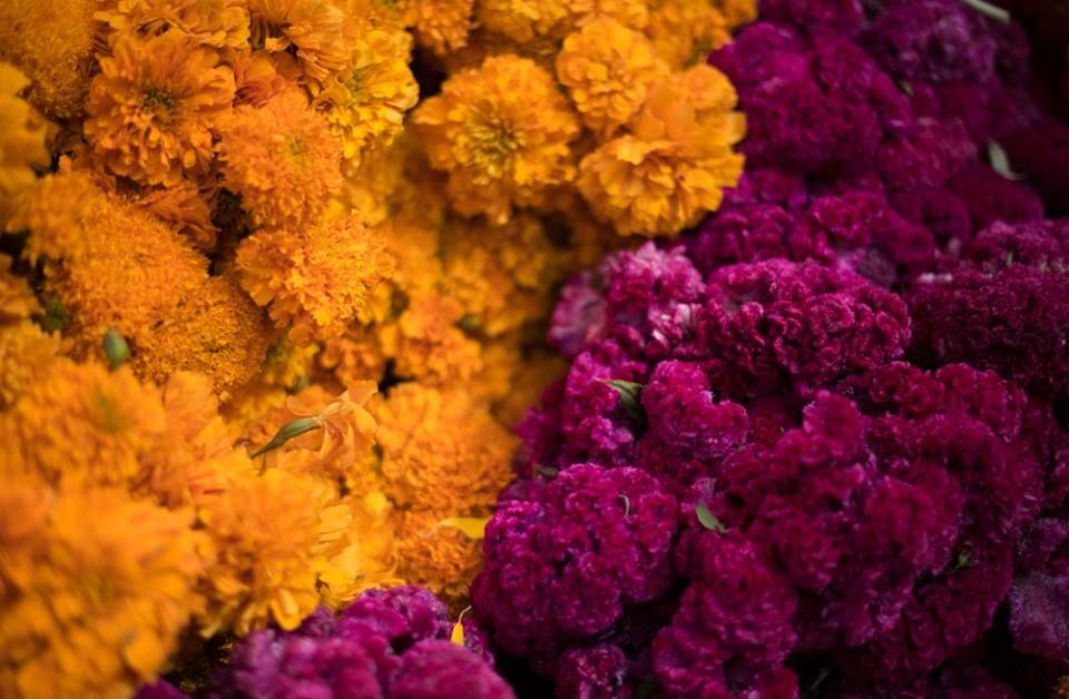 flor-de-terciopelo